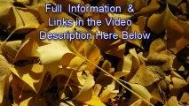 Cottone auctions-cottone auctions results