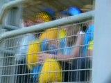 Finale Coupe de la Creuse U17 : Guéret contre Creuse Pole Sud