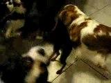 Jeu des chiens