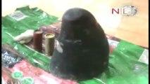 Rhino horn worth Rs 60 lakhs seized