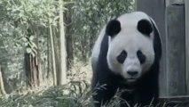 Twin baby giant pandas born in China