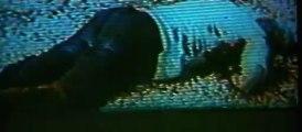 The DVDRip.DivX.AC3.5.1CH.CD3-
