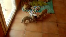 Les bébés jouent 25 06 2013