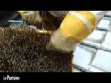 A la découverte des abeilles du toit de l'opéra de Paris