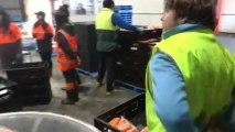 AUSTRALIE- Tasmanie: Yohann au travail!!! Ah les carottes!!!