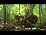 Opción prioritaria en iniciativa Yasuní - ITT es dejar el petróleo bajo tierra