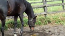 Un cheval qui fait un caca qui pue