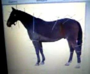 Come salire a cavallo - Come si sale a cavallo