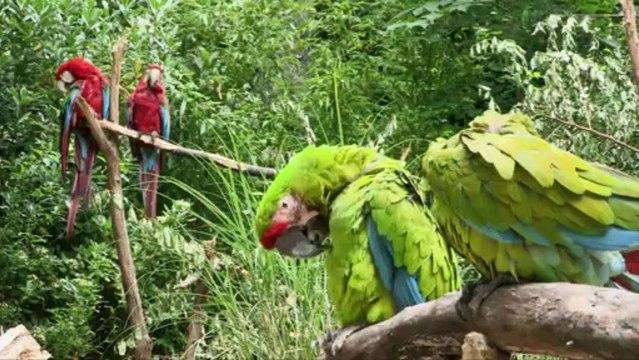 Pont-Scorff : le zoo est fécond