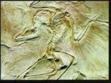 Evrim Teorisinin Çöküşü Yaratılış Gerçeği 6/8 www.harunyahya.org
