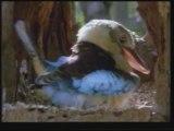 Evrim Teorisinin Çöküşü Yaratılış Gerçeği 1/8 www.harunyahya.org