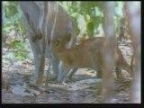 Evrim Teorisinin Çöküşü Yaratılış Gerçeği 3/8 www.harunyahya.org