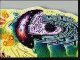 Evrim Teorisinin Çöküşü Yaratılış Gerçeği 2//8 www.harunyahya.org