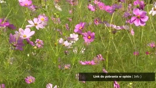zoofilia porno FILMY SEX Z ZWIERZENTAMI - video dailymotion