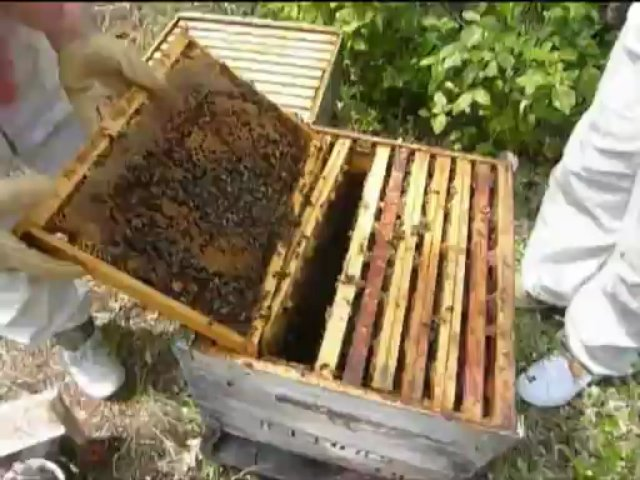"""""""French beekeeping"""" !"""