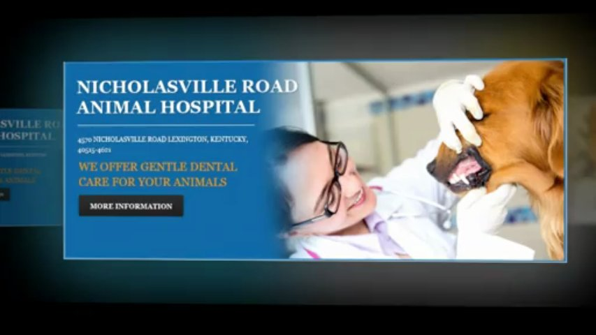Vet Lexington KY | Veterinary Lexington KY | Veterinarian Lexington KY