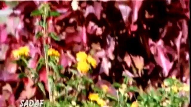 Masoom Chehra - Ansh: The Deadly Part (2002) Full Song