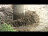 River lashes the foot of a bridge: post Uttarakhand flood scenario
