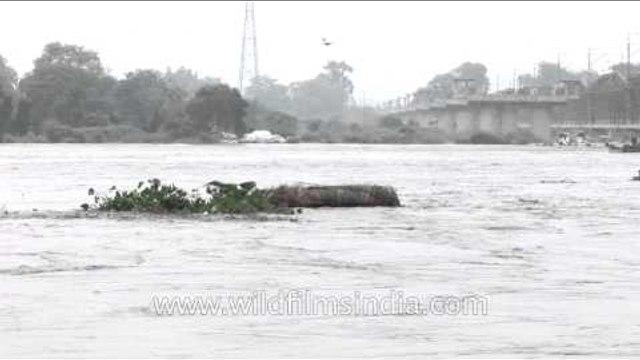 Yamuna river rises due to heavy rain