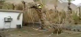 Un homme déracine un palmier et se casse la gueule! Gros débile!