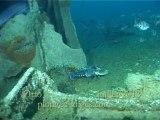 Faune sous-marine de d'île d'Yeu: plongée sur l'Otto