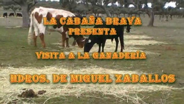 Visita a la Ganadería Hdros. de Miguel Zaballos
