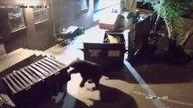 bear steals dumbasts . Un ours vole les poubelles d'un restaurant