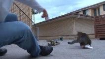 Jovem cai de skate e gato aproveita para dar uma volta
