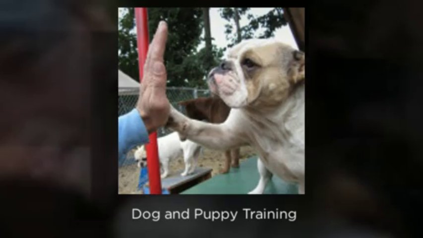 Dog Training, Dog Boarding, Puppy Training, Grooming, Kennel | Perfect Pooch