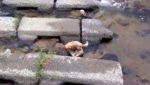 Un petit chien joue seul à la balle le long d'une rivière... Malin l'animal!!