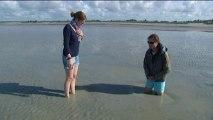 Au fil de l'eau : L'embouchure de la Sélune en baie du Mont saint Michel : attention aux sables mouvants