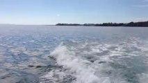 Dauphins au large de Saint Quay Portrieux