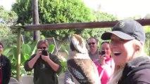 Un kookaburra rit avec les visiteurs d'un zoo