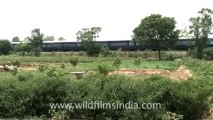 Indian countryside train-3