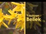 Yaşayan Bellek, 19 Mayıs Pazar 22.30'da TRT Okul'da