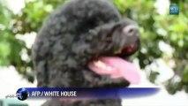 Après le chien Bo, les Obama accueillent la chienne Sunny