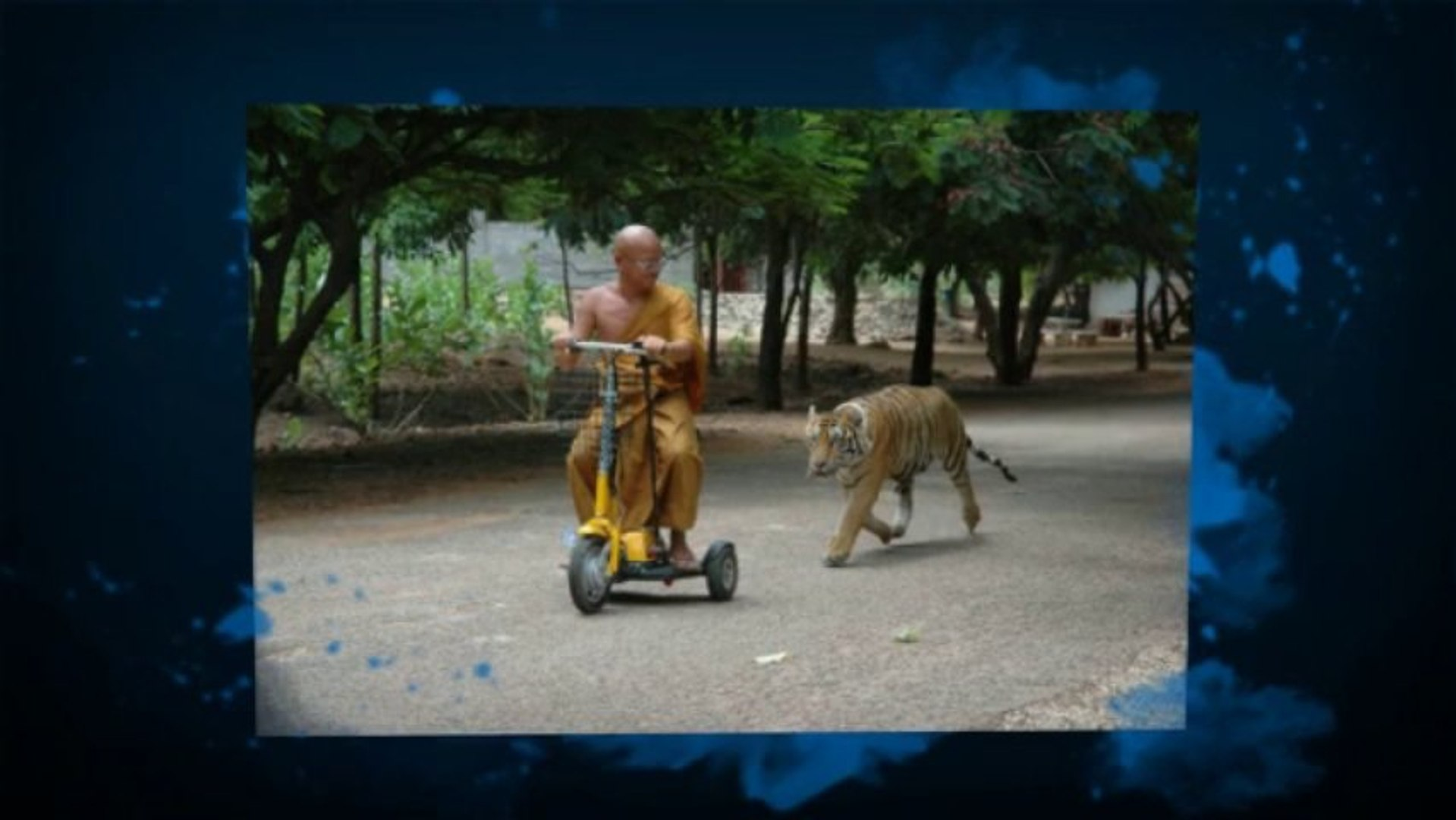 Tigers:  A Unique Tour Experience with Tigers (562) 889-4016)