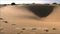 1526.Sam Sand Dunes, Jaisalmer