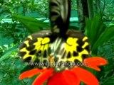 196. Butterflies on flowers-MPEG-4 800Kbps