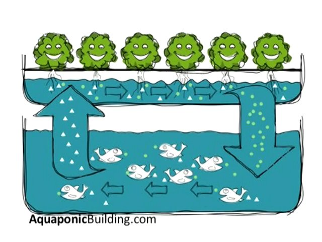 How does an aquaponic system work?