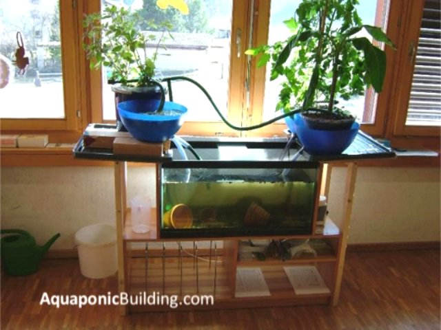 Indoor aquaponic systems