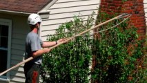 Bartow Tree Pruning, Care, Removal & Trimming Services