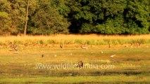 Ranthambore Wetlands