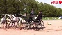Épreuves préparatoires des Jeux équestres mondiaux - Attelage