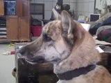 Phil Wasserman - Ultimate Dog Tease - Phil Wasserman