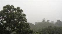 突然の豪雨(スコール)木が倒れそう A sudden squall  tree seems overthrown