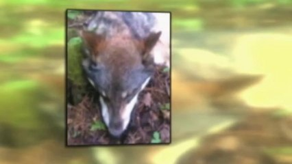 Teen wrenches wolf's jaws from head
