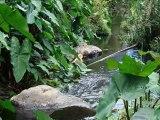 Les Trois Bassins sur l'île de la Réunion
