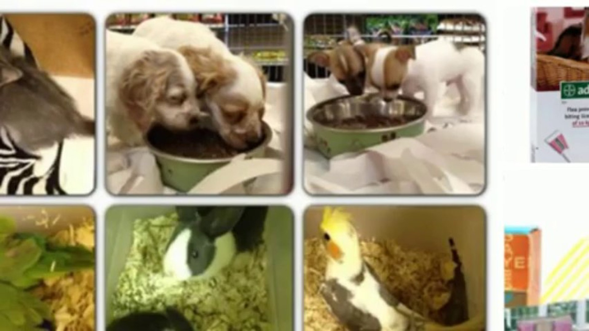 Our Pet World Singapore - Our Pet World Promo Code and Our Pet World ... - Save-with-Codes