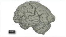 Big Brain: Atlas del cerebro humano